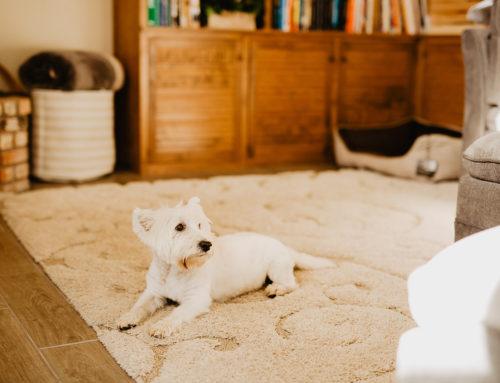 4 Easy Ways to Stop Pet Odors